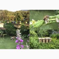 Пчелопакеты 2019 серой горной породы пчел двух видов