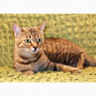 Мисс конгениальность, кошка Тиша в дар