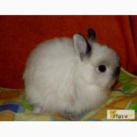 Карликовые декоративные кролики от 1 мес до 6 мес
