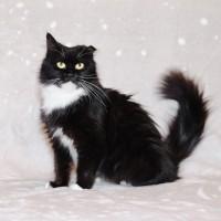 Кошка Маришка