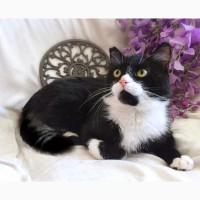 Молодой весельчак котик Тотошка в дар