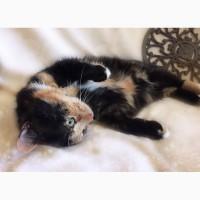 Кошечка Марфушечка-Душечка в дар