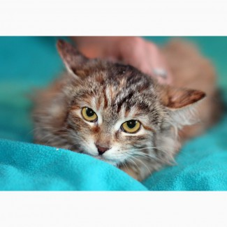 Маленький гномик котенок Принцесса в дар