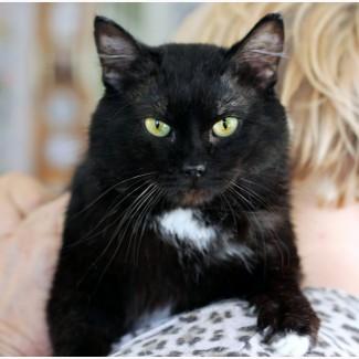 Отважный смельчак кот Гангстер ищет дом