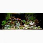 Продаю аквариумные коряги в Энгельсе и Саратове