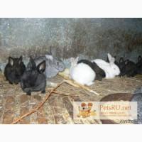 Кролики на развод, Михайловск