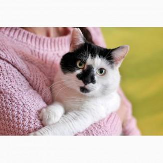 Клепыч - мягкие лапки, котик в хорошие руки