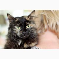Живописная кошка Максимка в дар