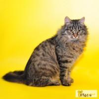 Котёнок- подросток Варька ищет дом