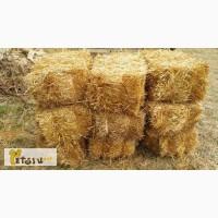 Солома пшеницы в тюках (брикетах). Краснодар