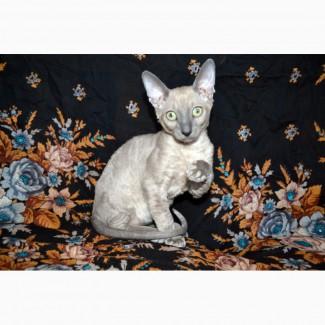 Котята роскошные из питомника
