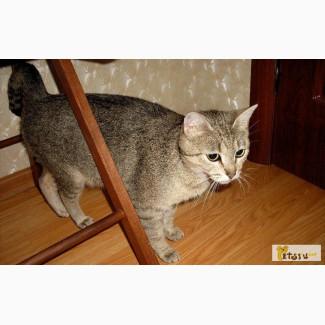 Ищет дом ласковая кошка абиссинского в Санкт-Петербурге