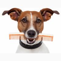 УСЛУГИ по уходу за шерстью собак и кошек ВСЕХ ПОРОД