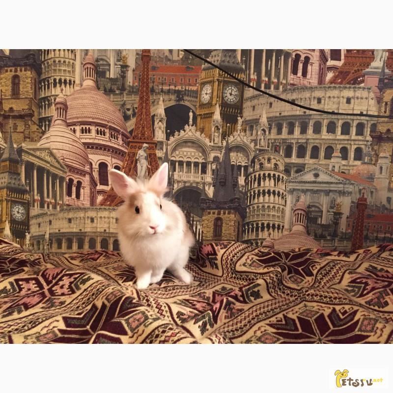 Фото 1/2. Продам декоративного кролика