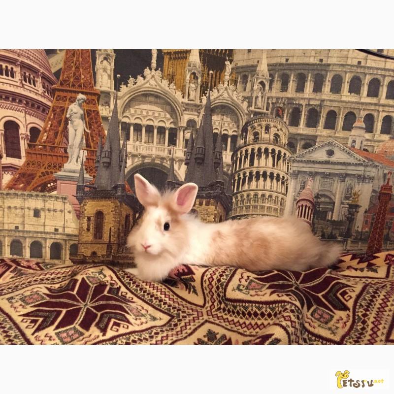 Фото 2/2. Продам декоративного кролика