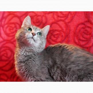 Кошка-жемчужина Алиса в дар добрым людям