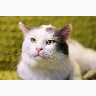 Чудесный певун и сочинитель песен котик Баста ищет дом