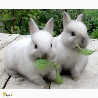 Продам милого кролика