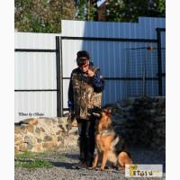 Дрессировка собак на отличной площадке в Кыштыме