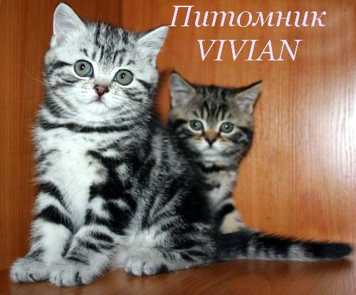 Фото 2/4. Британские котята из питомника