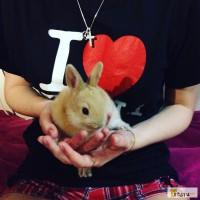 Декоративный кролик( девочка, 1 месяц)
