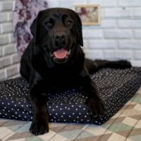Лежак для собак - Чёрный с белыми точками