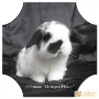 Вислоухие Крольчата из питомника