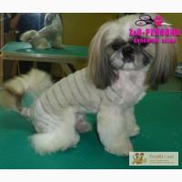 Стрижка Йорка на дому. Креативная стрижка собак, Йорка в корейском стиле и под шиншиллу