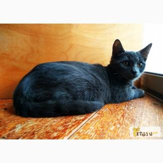 Котенок-девочка Нубия ищет дом в Москве