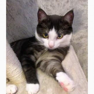 Уникальный по окрасу котенок Неймур, метис бенгала ищет дом