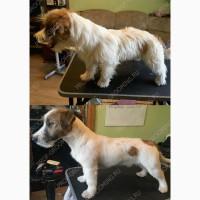 Профессиональный грумер окажет услуги по уходу за собаками