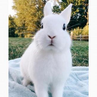 Декоративный кролик белый пушистый кролик глазки чёрные