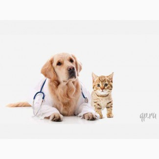 Выездная ветеринарная служба