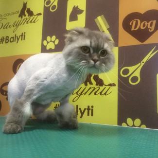 Недорогая стрижка для кота. Выезд на дом и в салоне. Грумер