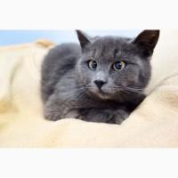 Котёнок подросточек Диора в добрые руки