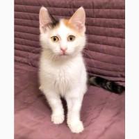 Очаровательная Китти - котенок в дар