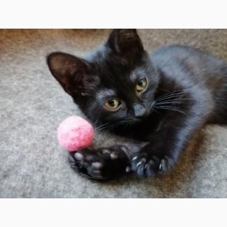 Черный котенок Муха очень хочет домой