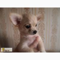 Инструктор-кинолог по случкам собак