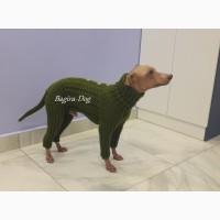 Одежда для голых собак ( Ксоло, Перуанских голых и КХС )
