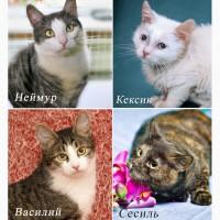 Котятки из приюта всех мастей. Всем мохнатым-хвостатым нужен дом
