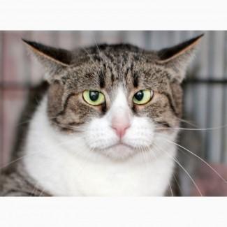 Необычная косоглазая кошечка Лара ищет дом