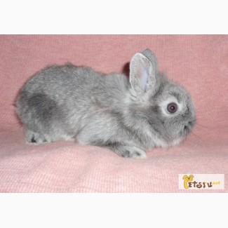 Продаем мини торчеухих кроликов любых пород по легкодоступным ценам