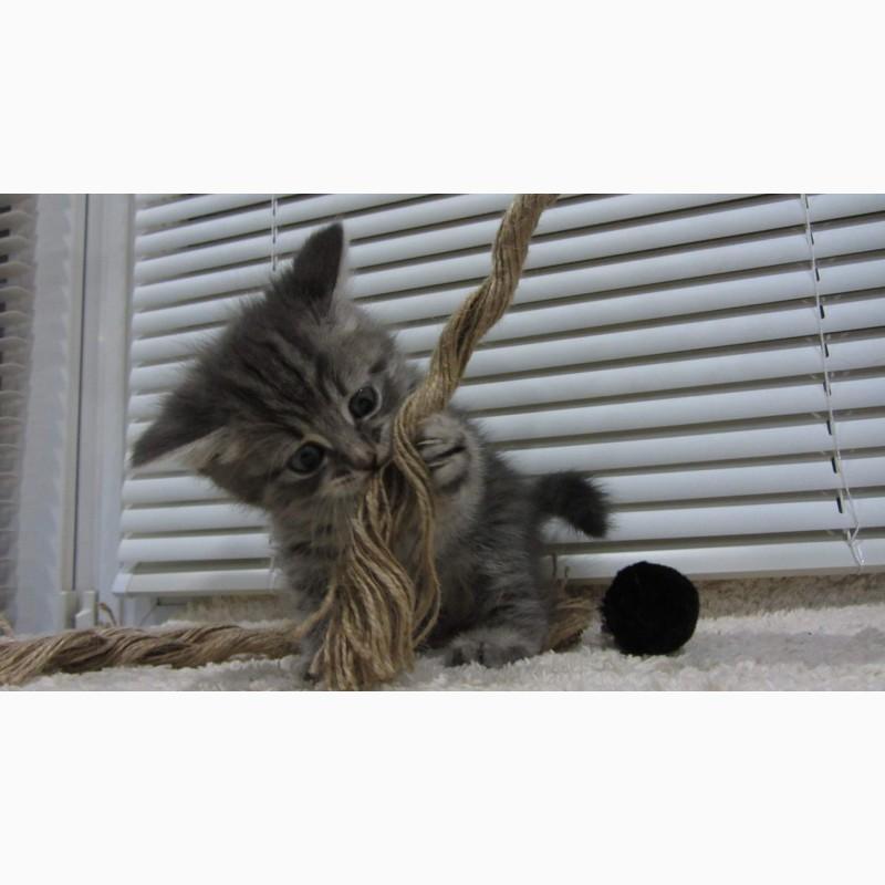 Фото 1/10. Обаятельный котенок - мальчик