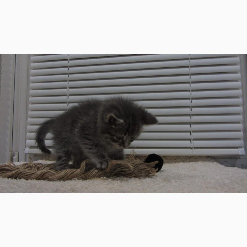 Фото 2/10. Обаятельный котенок - мальчик