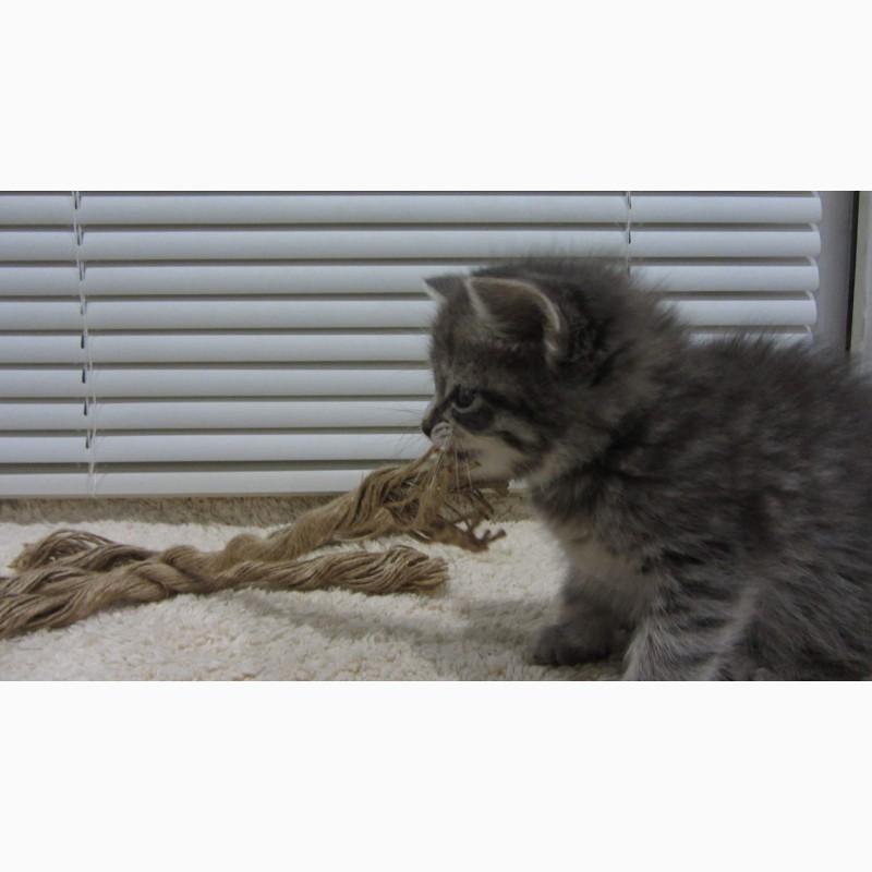 Фото 3/10. Обаятельный котенок - мальчик