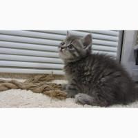 Обаятельный котенок - мальчик