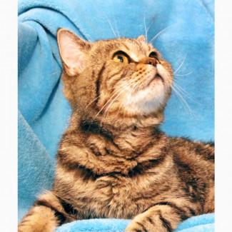 В дар котик Монпансье