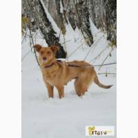 Жужа, стерилизованная собака. в Омске
