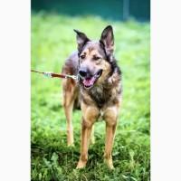 Умнейший пёс Сеня ищет любящую семью
