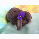 Купить карликового вислоухого кролика рекс в Москве Вы можете в питомнике Зайкина усадьба